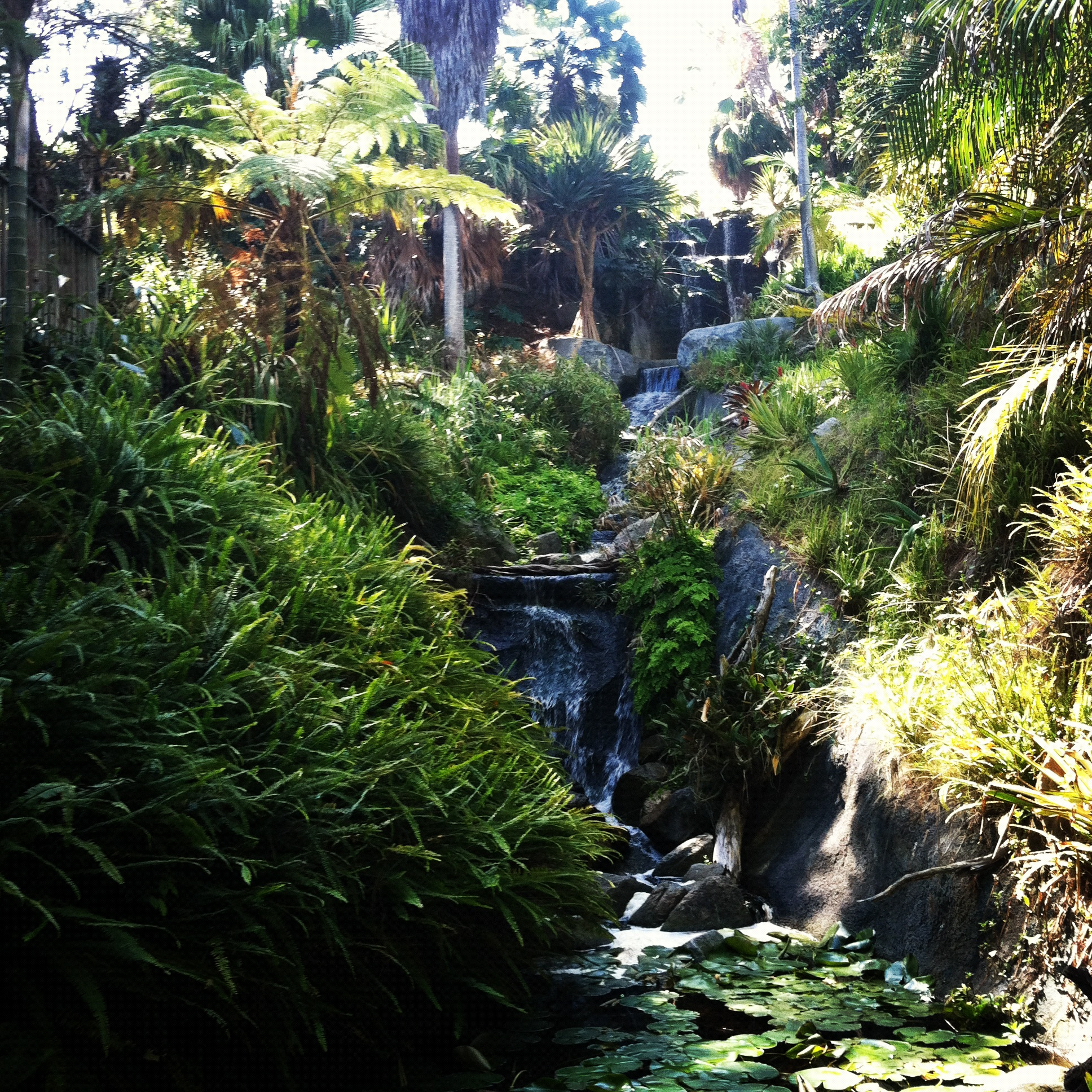 I Could Sit By The Waterfalls Forever! The San Diego Botanic Garden ...