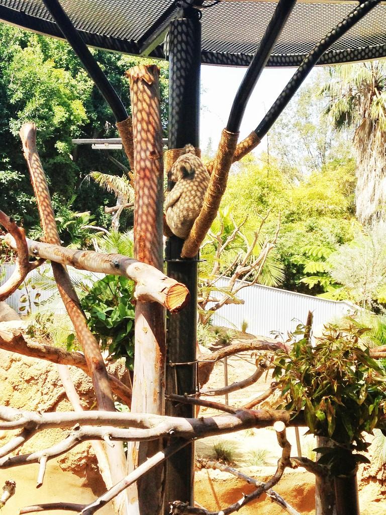 Koalafornia Dreamin!